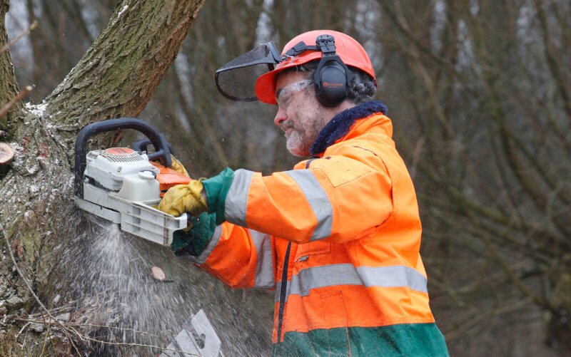 Общественники Волгограда хотят создать движение по защите деревьев