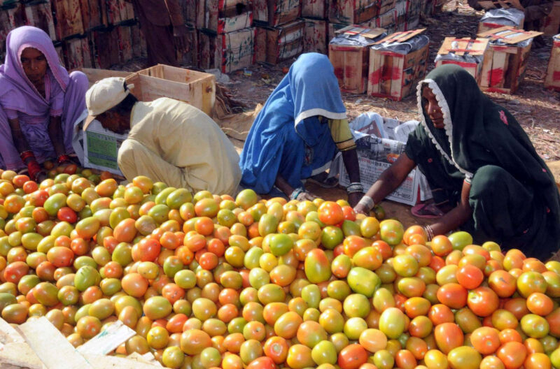 В Волгоград из Ирана завезли помидоры с молью