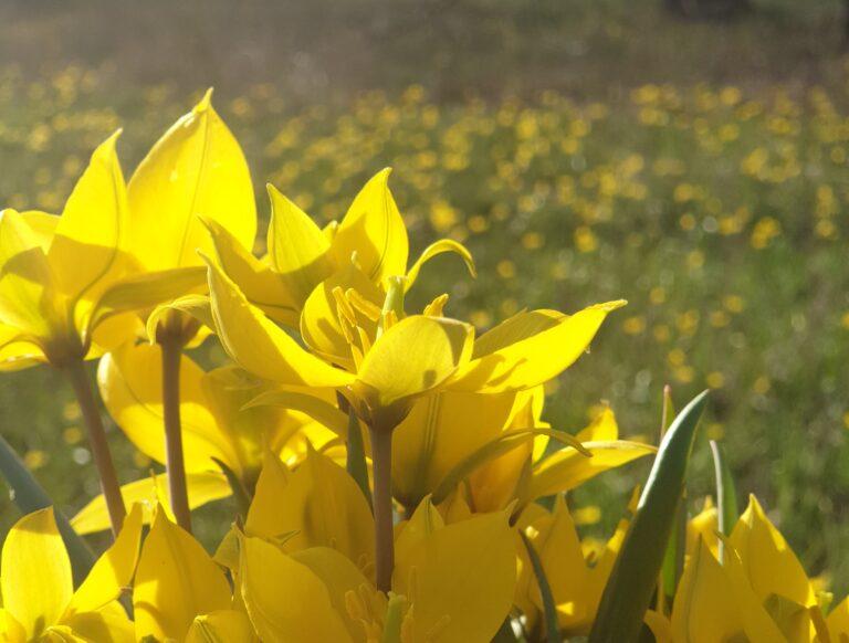 В преддверии 8 Марта волгоградцев начали штрафовать за цветы