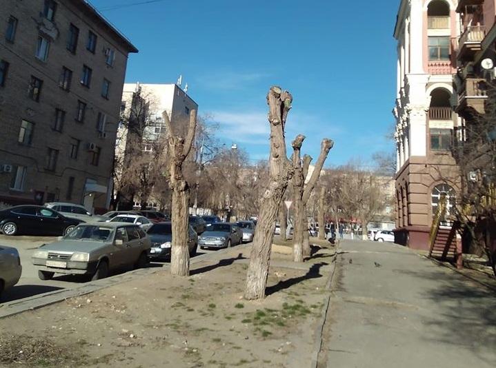 В Волгограде хотят запретить омолаживающую обрезку деревьев