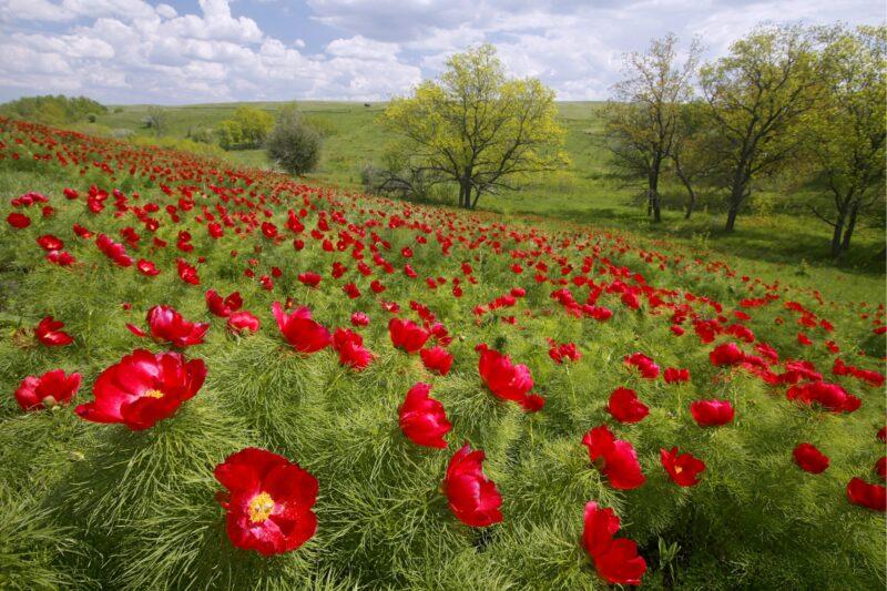 Защитники природы вышли на охоту за продавцами редких цветов в Волгограде