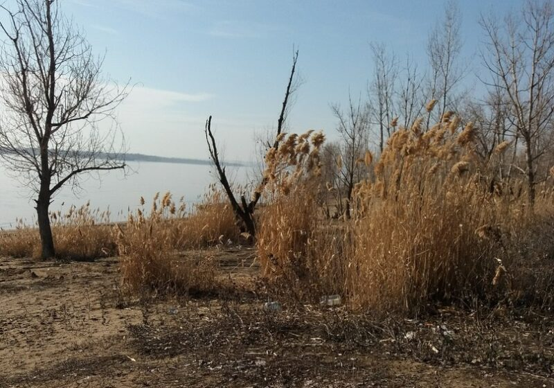 В Ворошиловском районе Волгограда пройдет экологическая акция