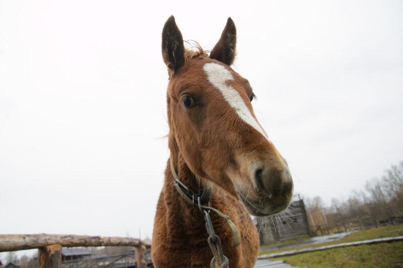 «Не смог пройти мимо»: 26-летний волгоградец ответит за воровство лошадей