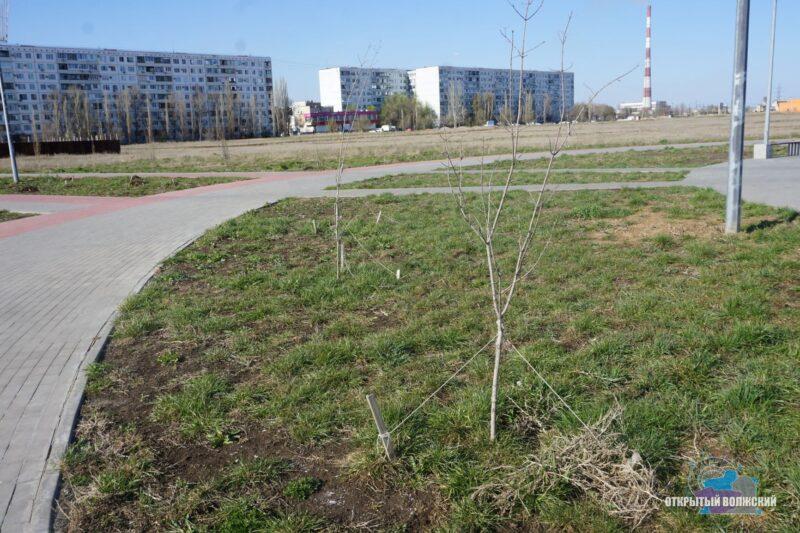 «ПОЗИТИВная» история или Как в Волжском освоили 20 миллионов на благоустройство парка