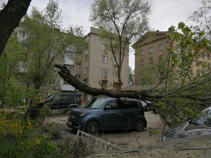 На Советской, 43 очередное дерево упало на автомобиль