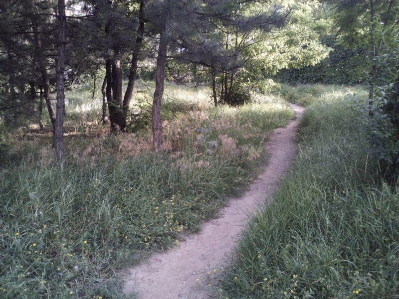 5 миллионов деревьев высадили в лесах Волгоградской области
