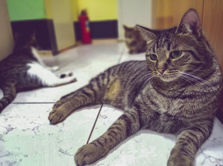 Волгоградская «Котейня» не пережила самоизоляцию