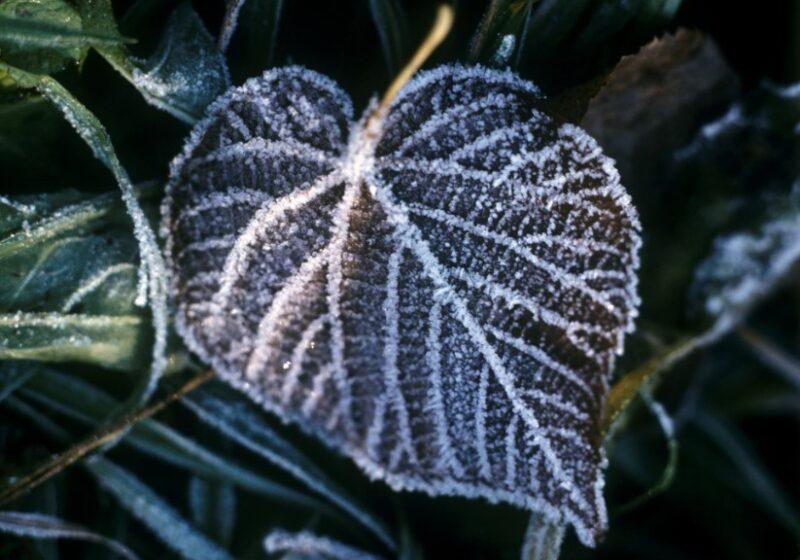 По Волгоградской области ударят ночные заморозки