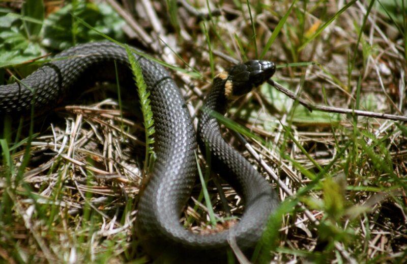 Волгоградцы массово истребляют безобидных змей
