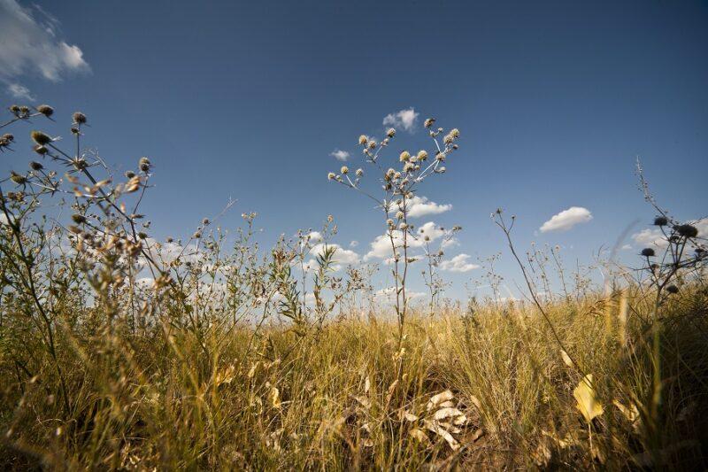 МЧС предупреждает волгоградцев о жаре выше 40-ка градусов