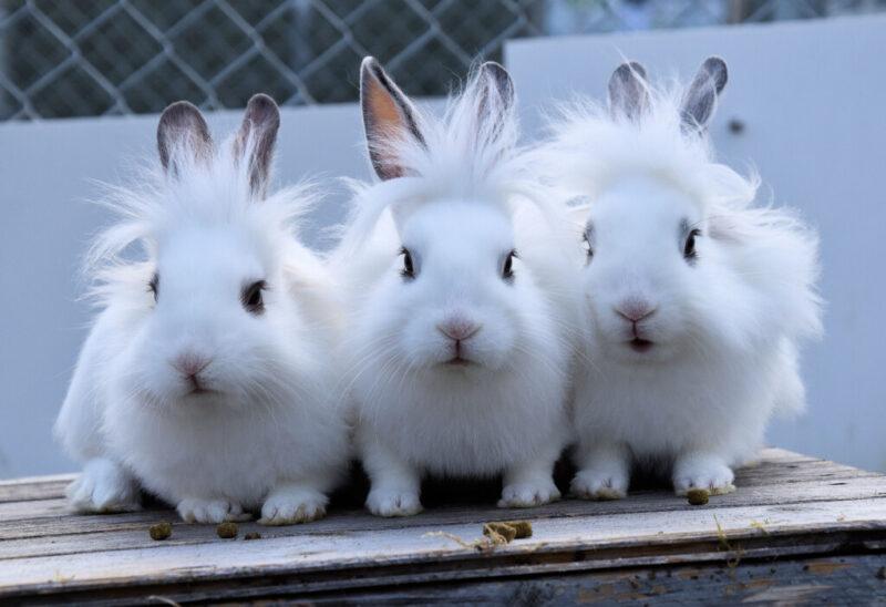 В закрытом из-за пандемии парке Волжского расплодились кролики
