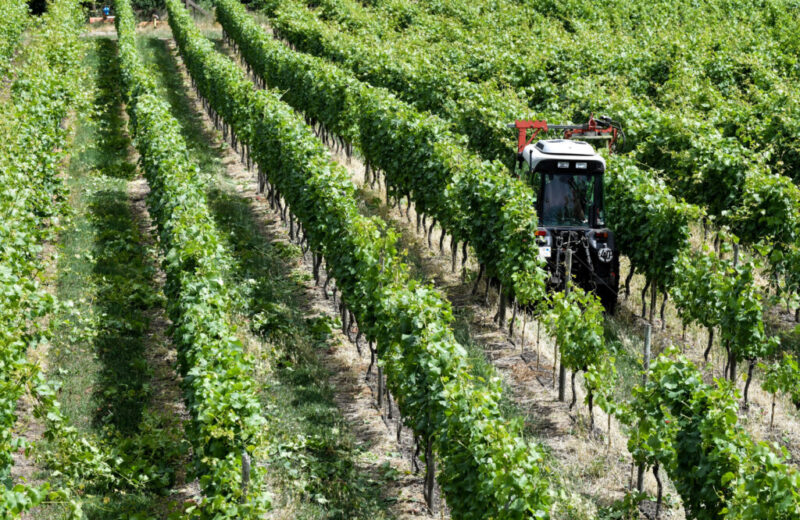 В Волгоградской области впервые проверят качество местных вин