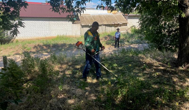 В Волгоградской области сожгли тысячу кустов конопли