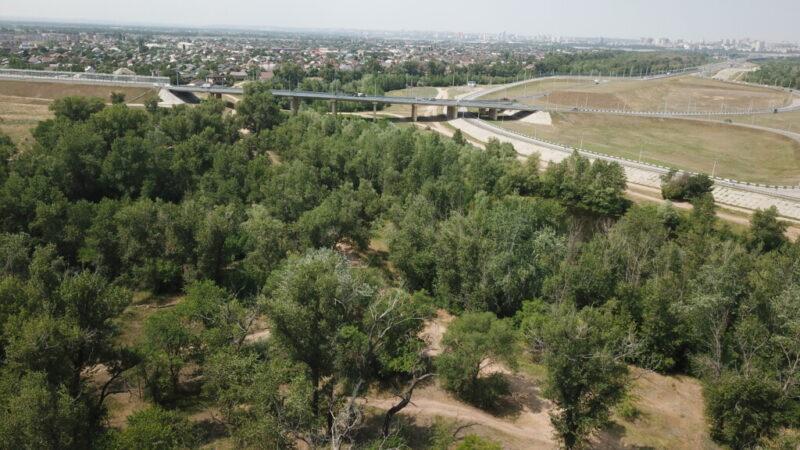 В Средней Ахтубе из-за строительства моста вырубят 8000 деревьев