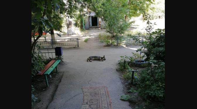 «Они бегают и лают на детей»: волгоградка пожаловалась на больших бездомных собак у подъезда