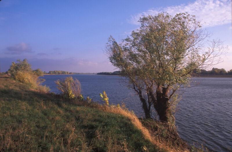 Превратится ли река Ахтуба в «зловонную лужу»? Ответ экологов волгоградской администрации на скандальное заявление экспертов