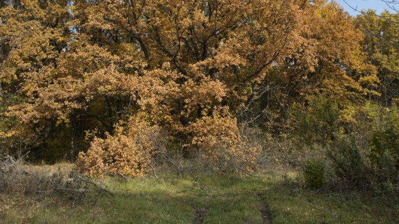 В Волгоградской области продлили некоторые ограничения