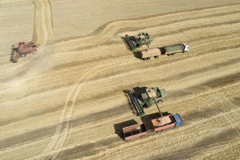 Полмиллиона тонн зерна экспортировали в другие страны из Волгоградской области
