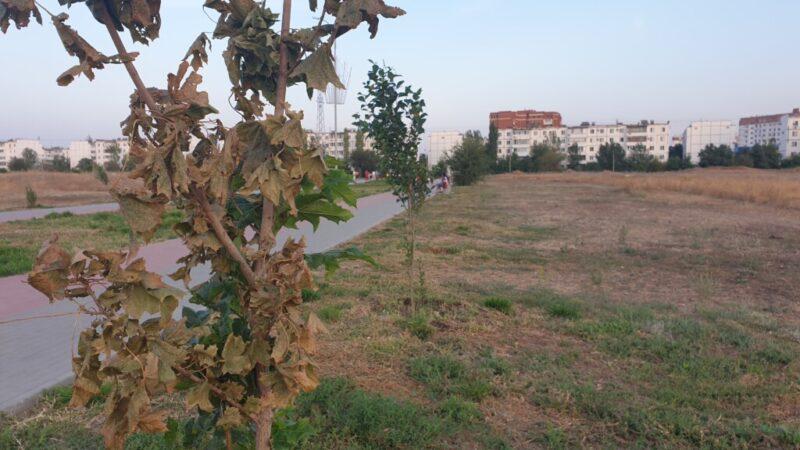 В Волжском завершается сезон полива: но решение по высушенному «парку» ещё не озвучено