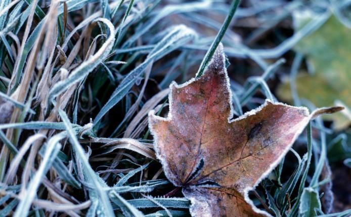 Заморозки ожидаются в Волгоградской области