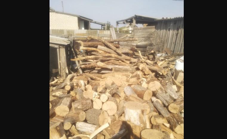 44-летний безработный волгоградец вырубил полсотни деревьев