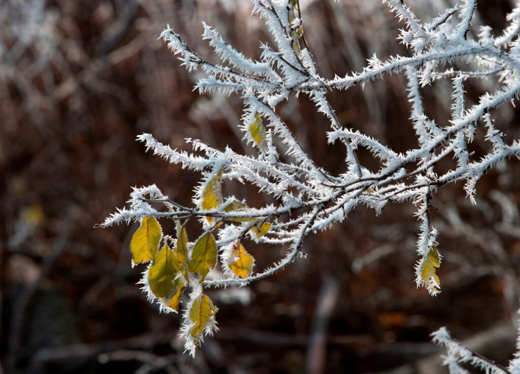 Аномальные 25-градусные морозы накроют Волгоград 23 февраля