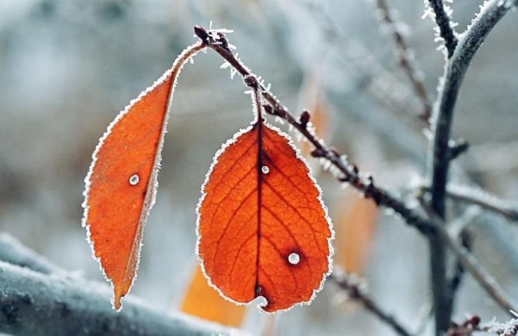 Ночные заморозки обещают жителям Волгограда синоптики
