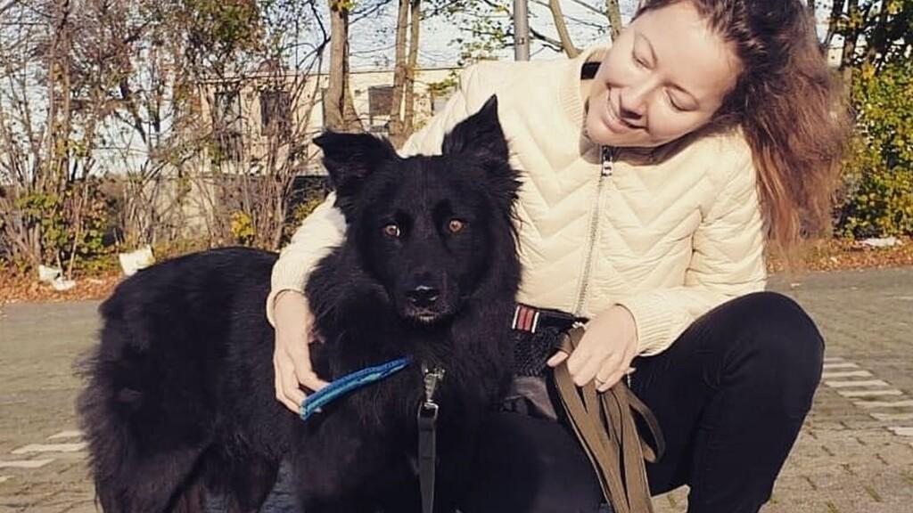Бездомный пес из волгоградского приюта нашел новый дом в Нидерландах