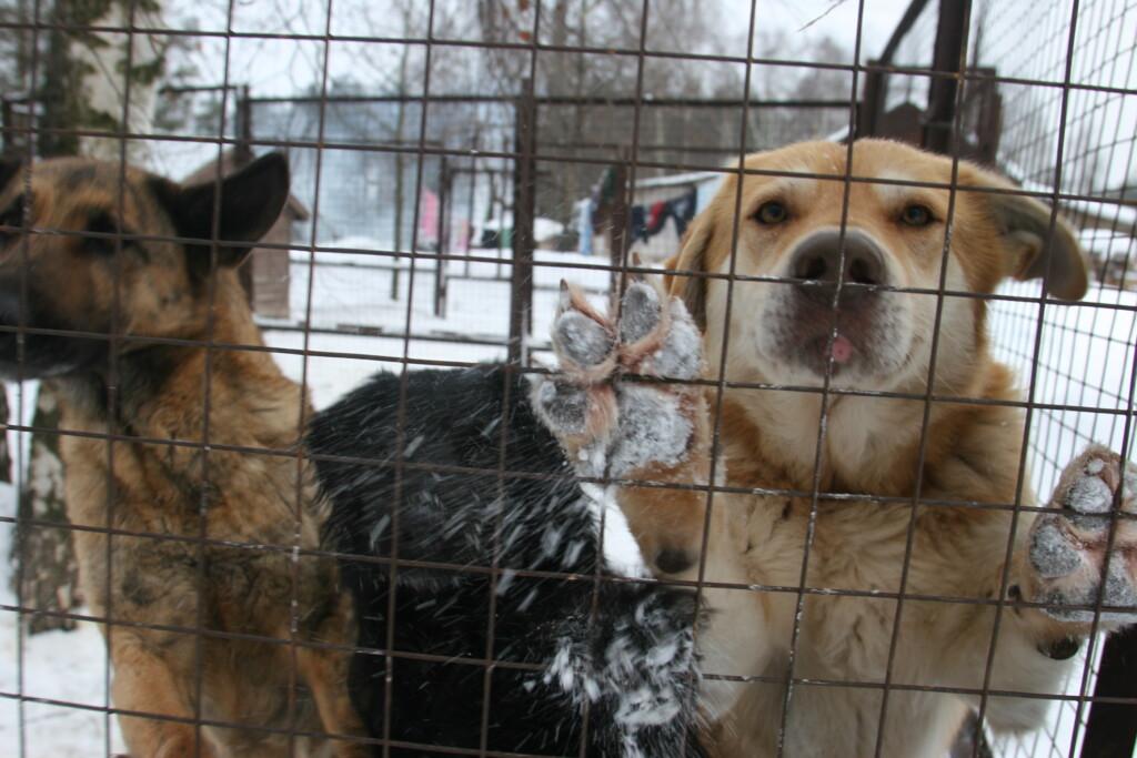 Волгоградские благотворительные фонды помощи бездомным животным получили 1,8 и 1,2 млн рублей