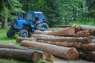 Под Волгоградом осудят лесника, который разрешил рубить деревья за миллионный «гонорар»