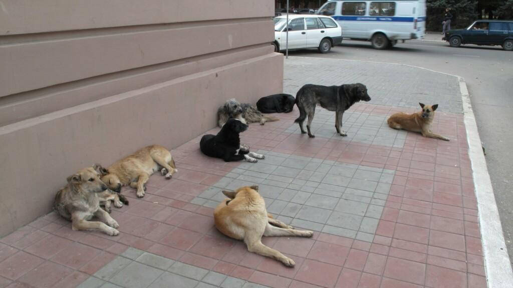 В мэрии Волгограда собираются спасти 100 бездомных собак