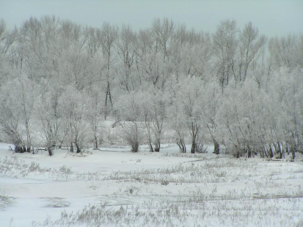 Волгоградским лесам нанесли ущерб на 82 тысячи рублей
