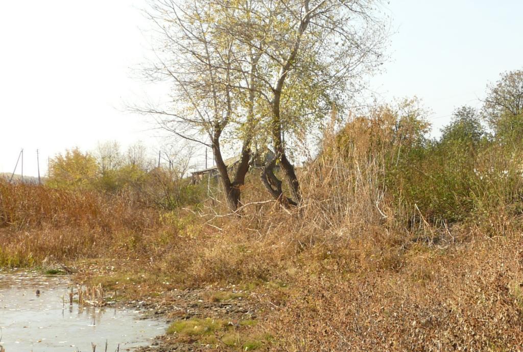 «Умирающую» реку Царица обещают реабилитировать в Волгоградской области