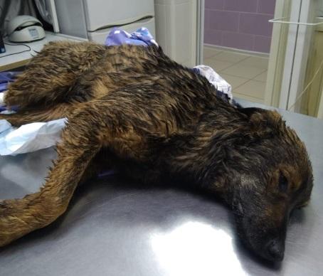 """Жители """"Бейкер Стрит"""" заявили о массовой травле собак"""