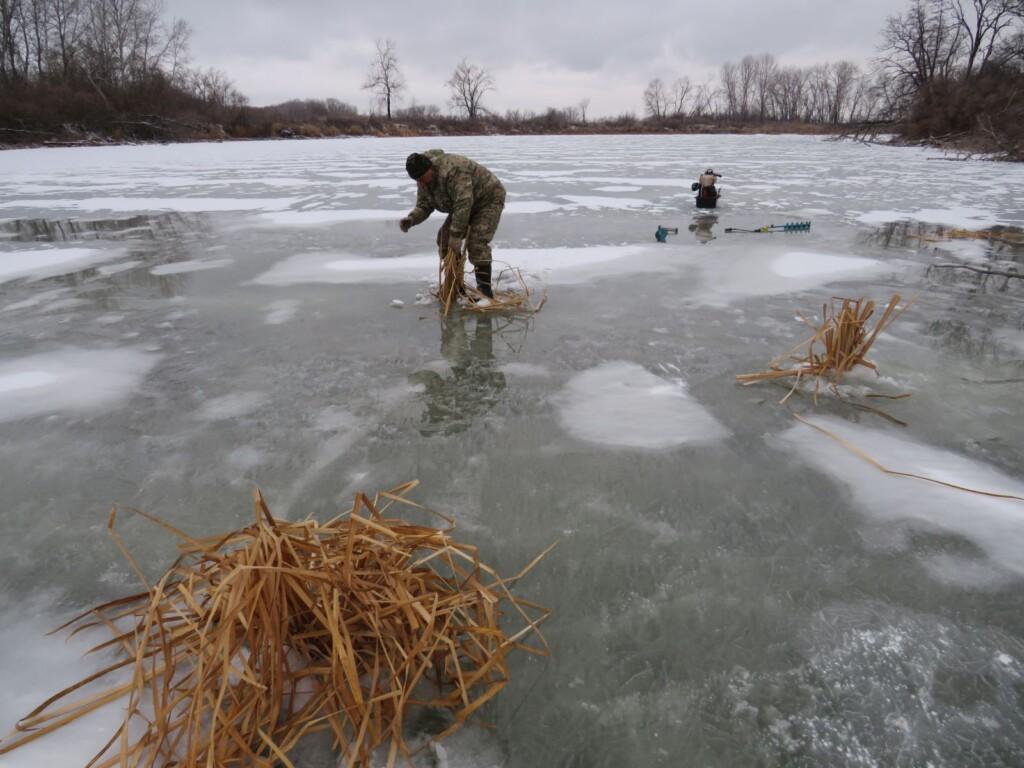 Волгоградскую рыбу спасли от замора