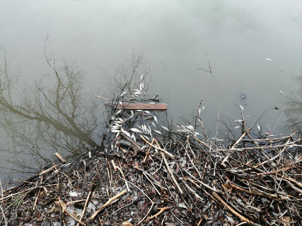 Найдены виновники массовой гибели рыбы в волгоградской реке Арчеда