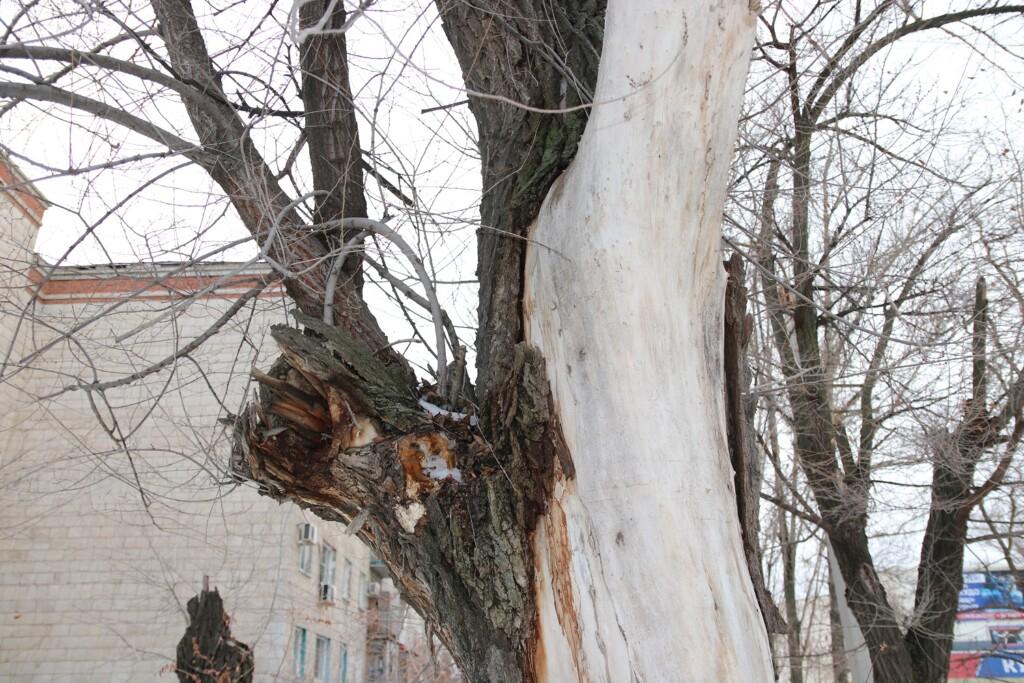 Треть деревьев вырубят на проспекте Жукова в Волгограде