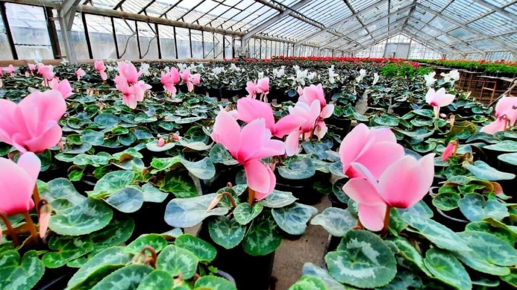 В оранжерее под Волгоградом открывается выставка редких цветов