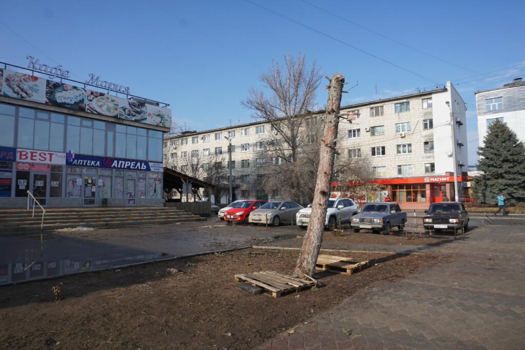 """В центре Волжского """"обрили"""" 3-метровую ель"""