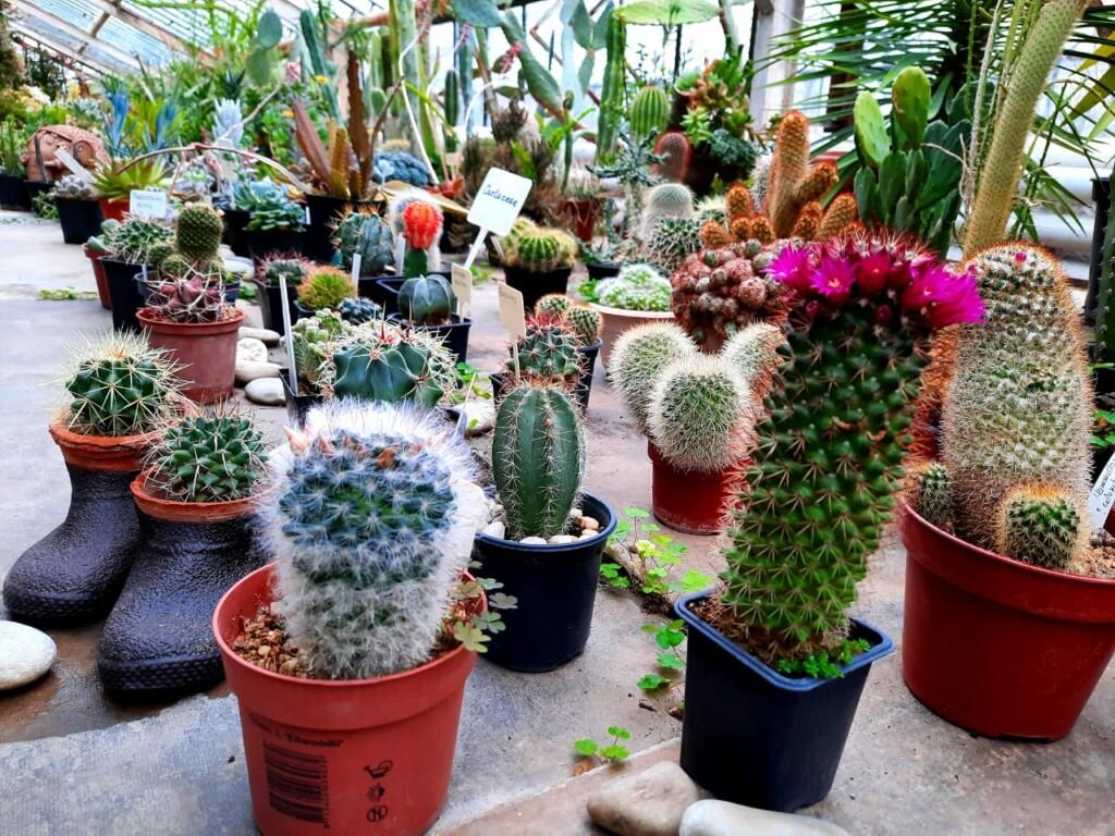 Выставку кактусов в Волжском закроют 17 апреля