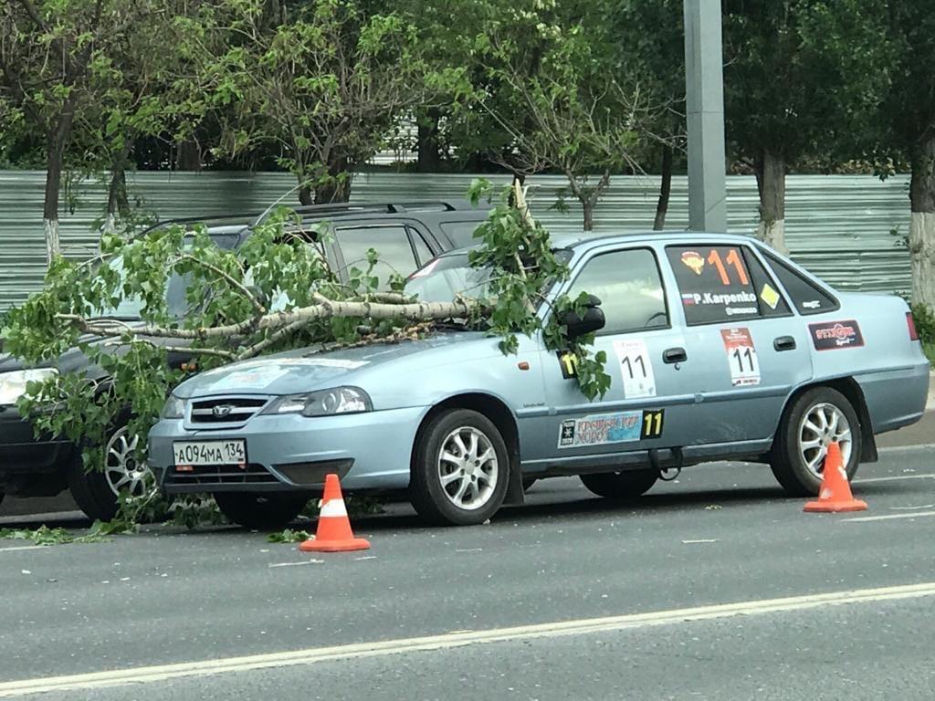 В Волгограде дерево упало на учебную машину