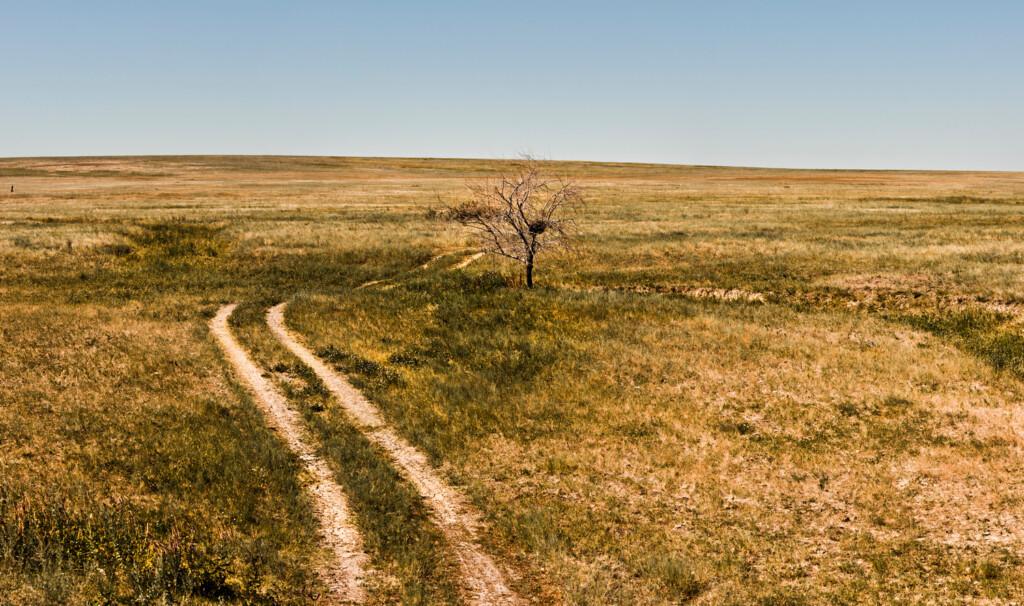 В Волгограде будут бороться с опустыниванием всей России