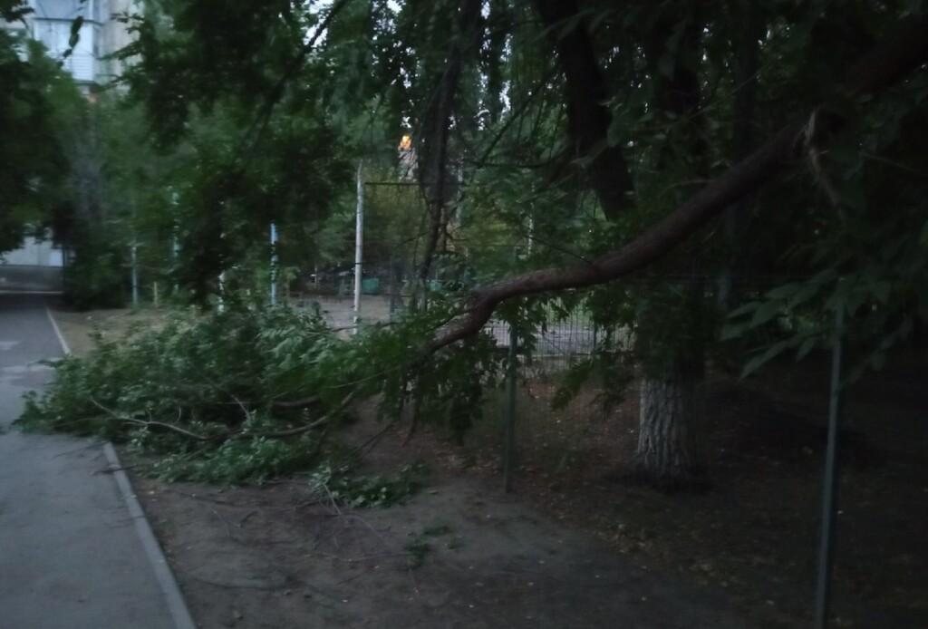 В Волгограде убирают поваленные деревья и оборванные  ночным ураганом провода