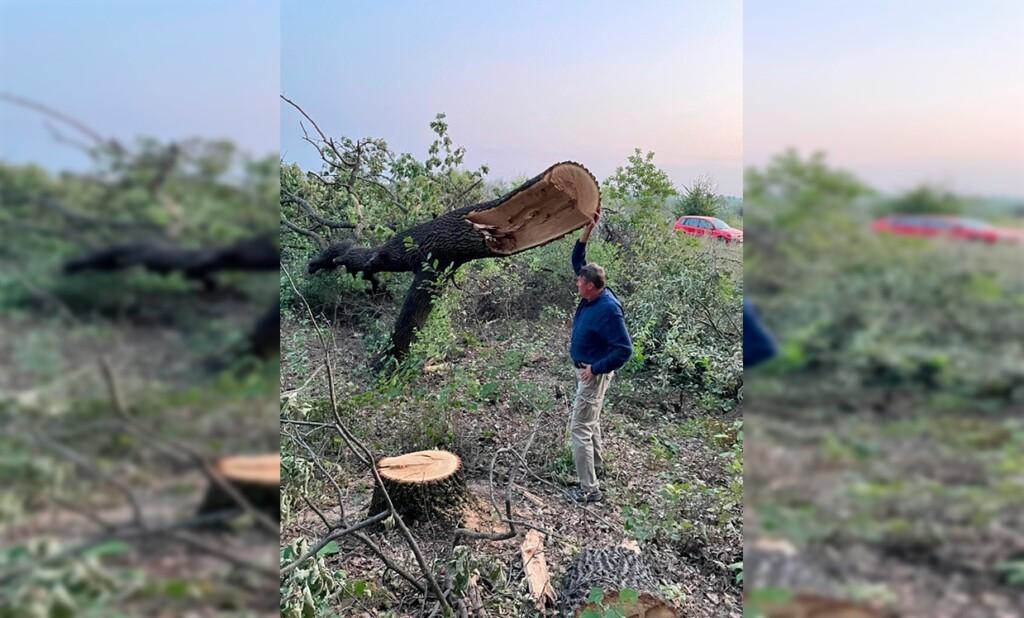 Волгоградские эко-активисты заявили о варварской вырубке дубов в Волго-Ахтубинской пойме