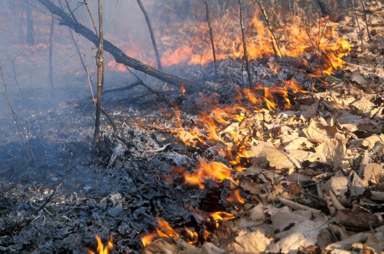 Из-за пастуха в Иловлинском районе произошел пожар площадью 10 гектар