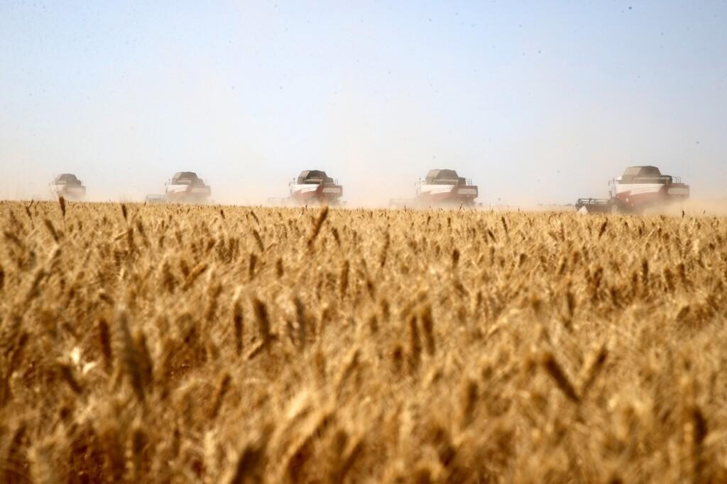 Донской регион вышел на первое место по урожаю хлеба