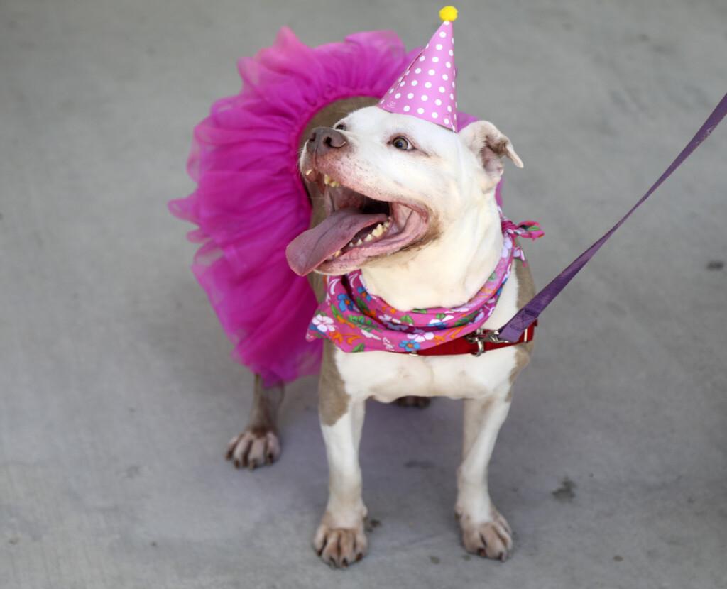 В воскресенье в ЦПКиО состоится большой праздник в честь 10-летия приюта для животных «Дино»