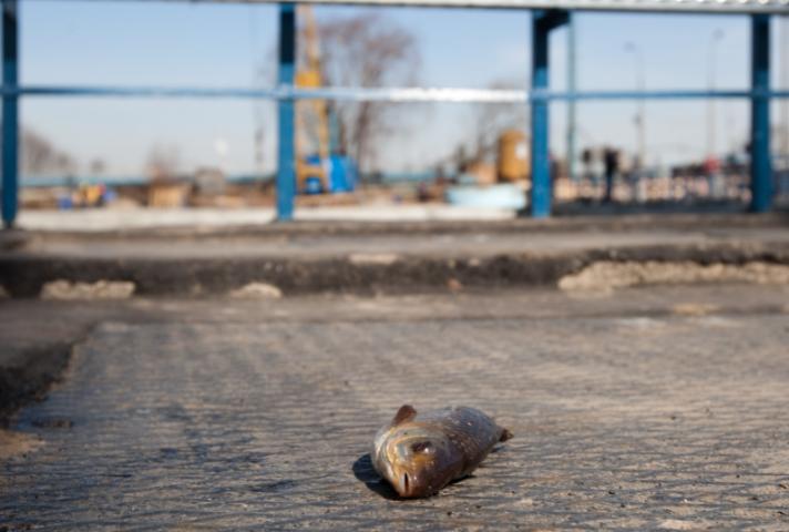 В Волгоградской области ООО «Базис» заплатит 3 миллиона за срыв муниципального контракта
