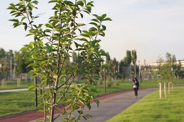 В центре Волгограда высадят 500 молодых деревьев